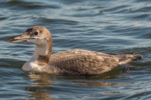 Loon Lake Monona-12