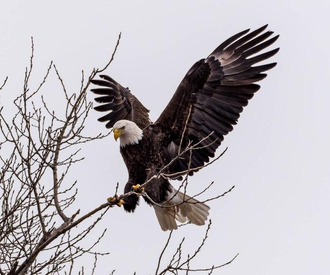 Eagles Petenwell 1-24-16-14