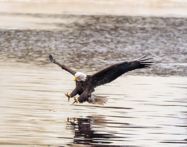 Eagles Petenwell 1-24-16-15