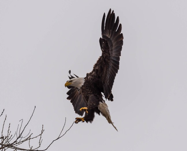 Eagles Petenwell 1-24-16-19