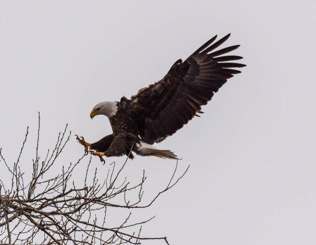 Eagles Petenwell 1-24-16-20