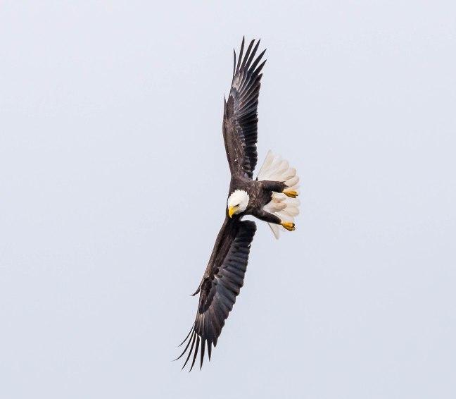 Eagles Petenwell 1-24-16-21