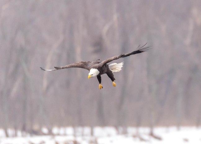 Eagles Petenwell 1-24-16-22