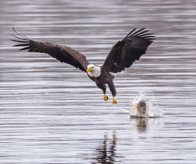 Eagles Petenwell 1-24-16-25