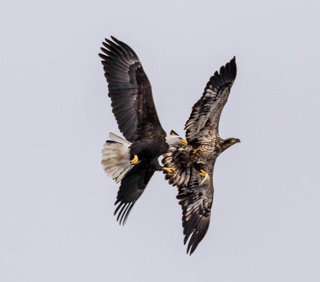 Eagles Petenwell 1-24-16-35