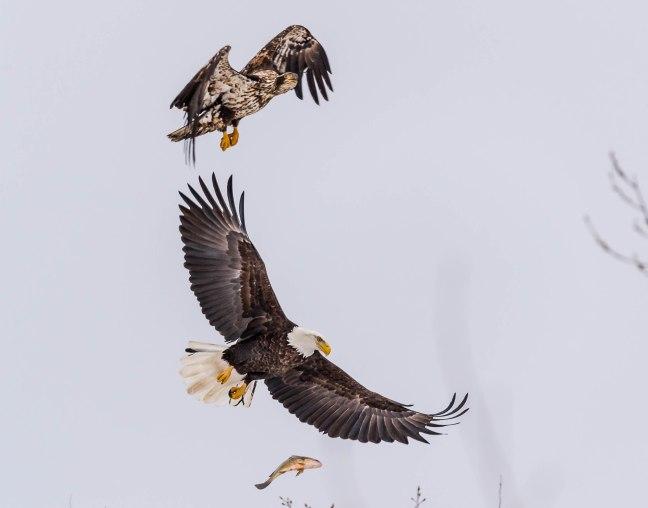 Eagles Petenwell 1-24-16-36