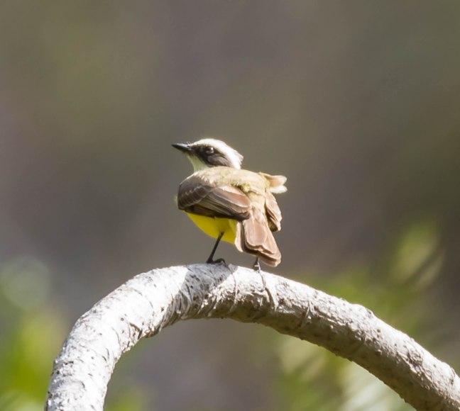 Chocoyero Canyon-Granada Day 3-25