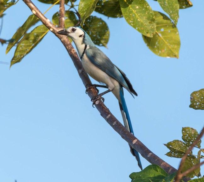 Lake Nicaragua's Asese Bay and Isletas day 4-16