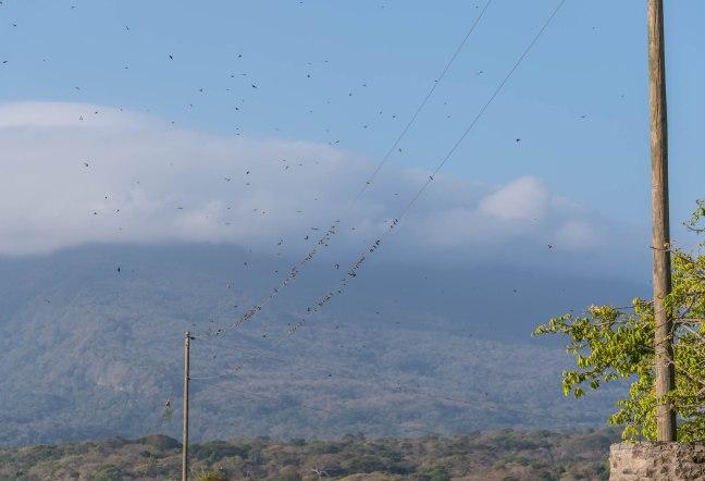 Lake Nicaragua's Asese Bay and Isletas day 4-21