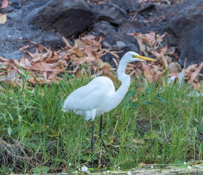 Lake Nicaragua's Asese Bay and Isletas day 4-22