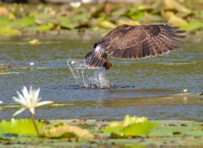 Lake Nicaragua's Asese Bay and Isletas day 4-61