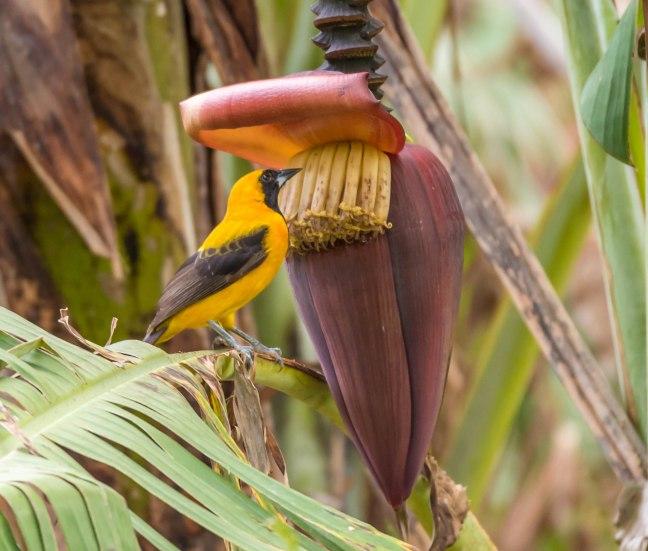 Selva Negra-Managua-12