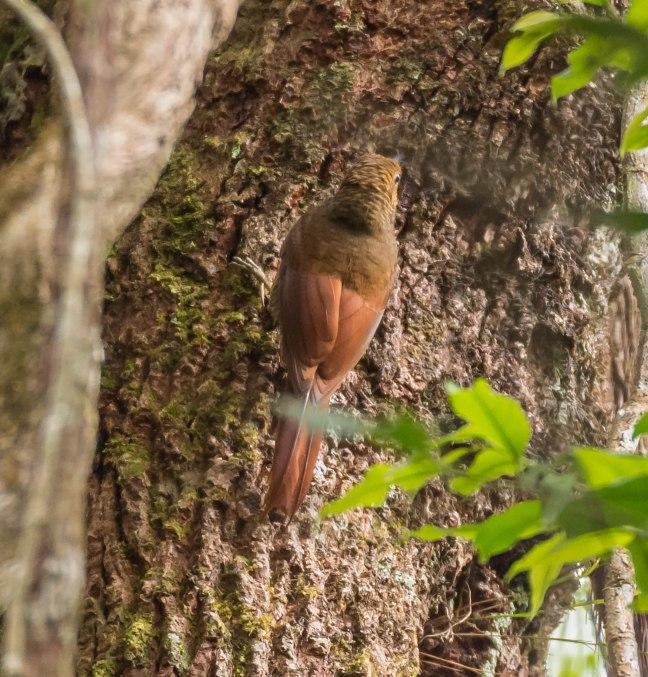 Selva Negra-Managua-22