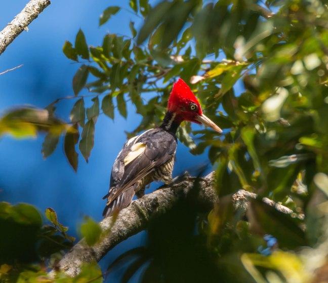 Selva Negra-Managua-24