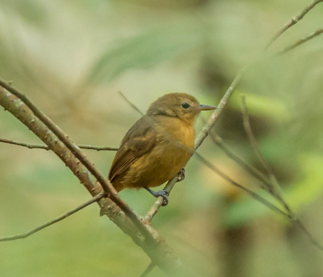 Selva Negra-Managua-25