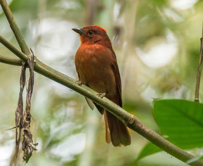 Selva Negra-Managua-26