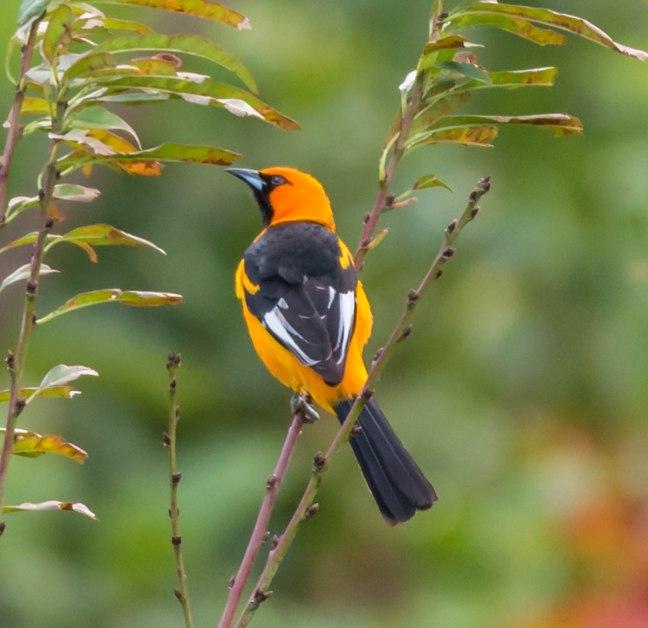 Selva Negra-Managua-3