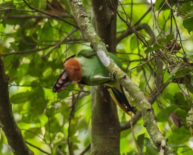 Selva Negra-Managua-30
