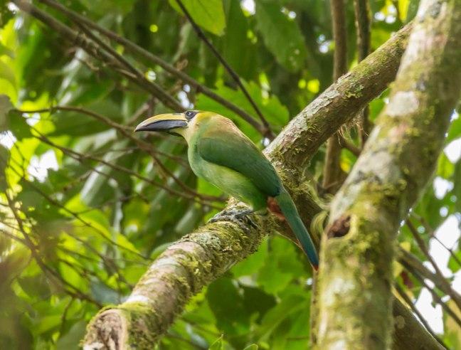 Selva Negra-Managua-31