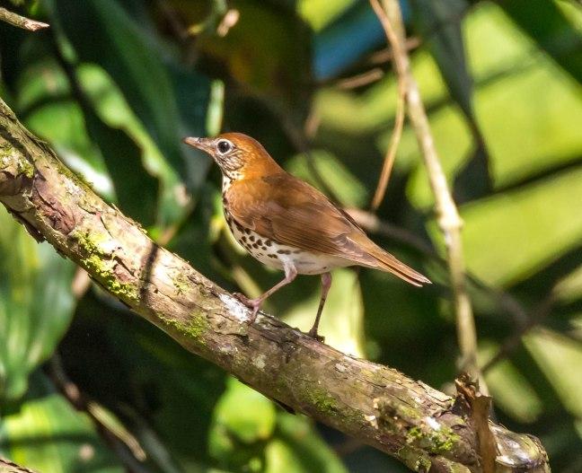 Selva Negra-Managua-43