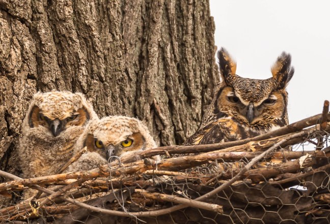 GHOwlets-Lakeshore Preserve-2