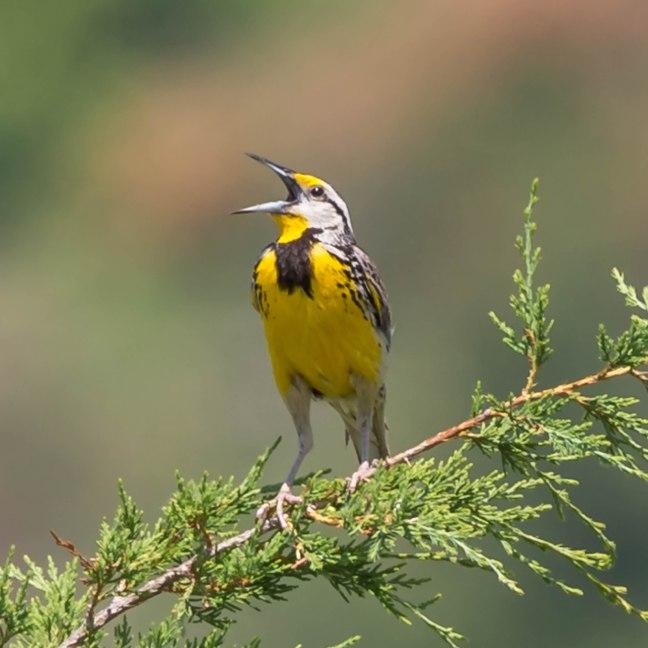 Parfrey's Glen-Spring Green Preserve 6-18-16 Jeff Galligan-31