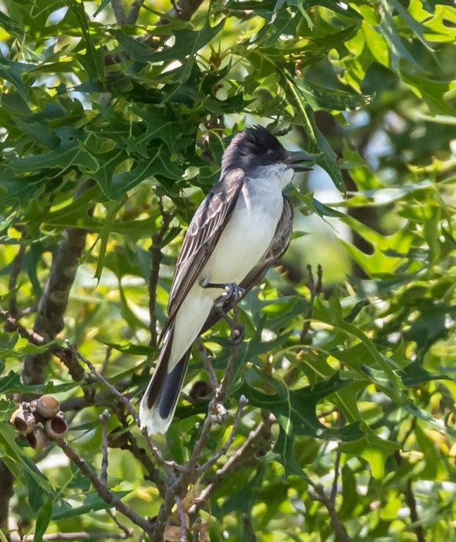 Parfrey's Glen-Spring Green Preserve 6-18-16 Jeff Galligan-34