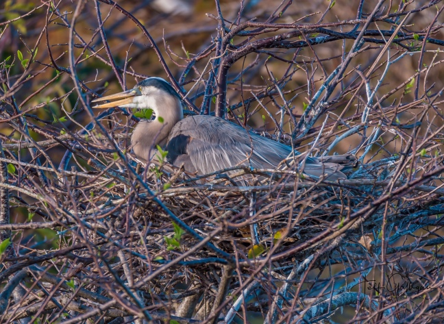 Wacodahatchee Wetlands and Blue Cay Preserve 2-25-18 (18 of 131)