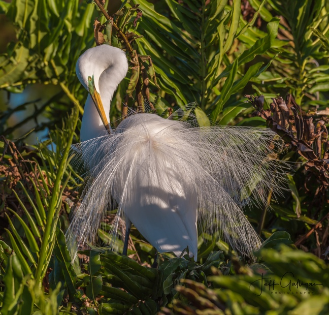 Wacodahatchee Wetlands and Blue Cay Preserve 2-25-18 (25 of 131)