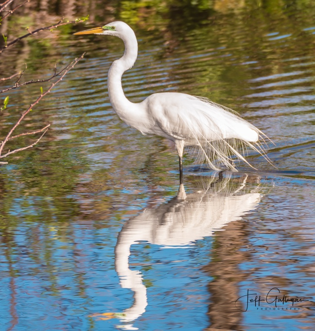 Wacodahatchee Wetlands and Blue Cay Preserve 2-25-18 (27 of 131)