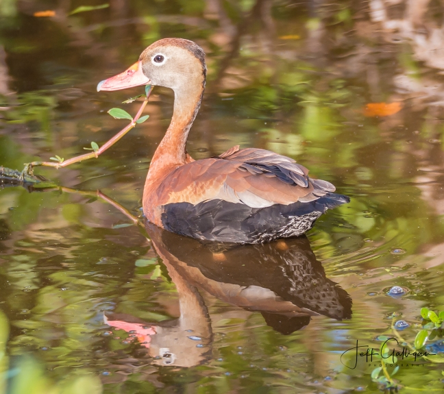 Wacodahatchee Wetlands and Blue Cay Preserve 2-25-18 (29 of 131)