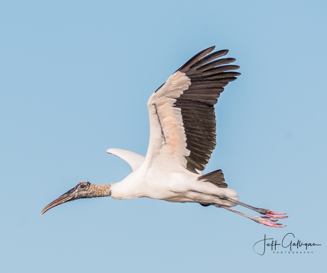 Wacodahatchee Wetlands and Blue Cay Preserve 2-25-18 (35 of 131)