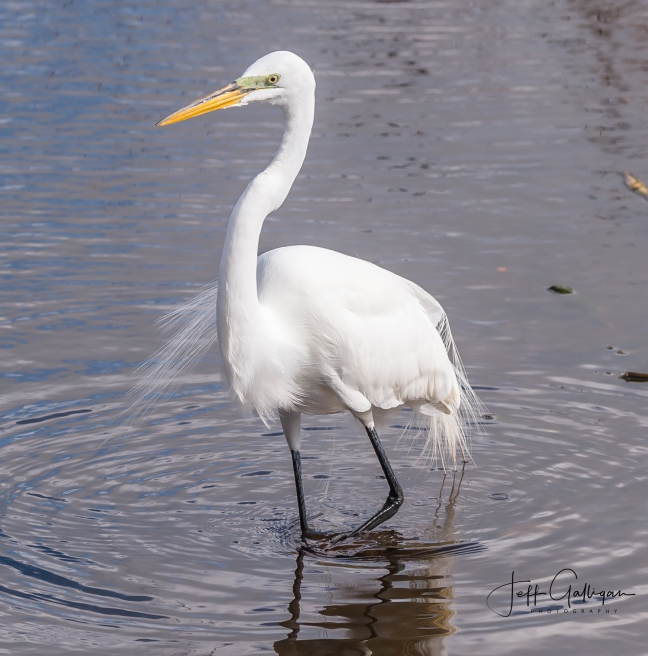 Wacodahatchee Wetlands and Blue Cay Preserve 2-25-18 (63 of 131)